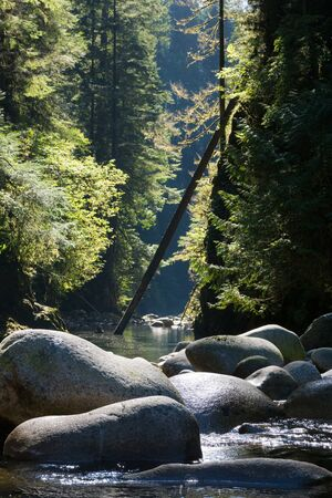 quiet stream in lynn valley Vancouver on a sunny afternoon Imagens