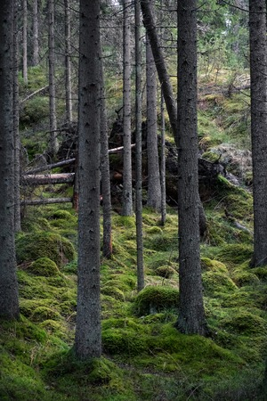 Old primeval forest with nice lights and shadows Stock Photo