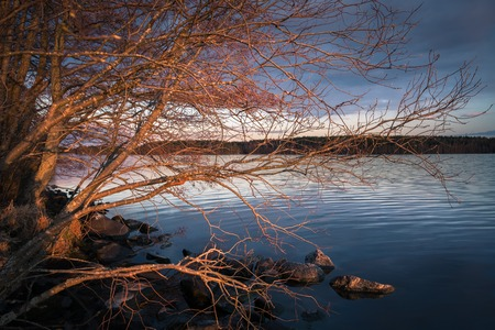 surface: Landscape with golden branches and calm lake at spring evening Stock Photo