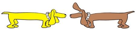 dachshunds Vector