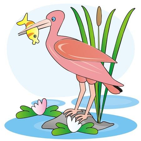 cattail: ibis