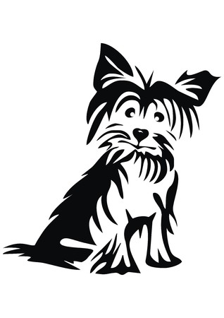 little dog: Yorkshire Terrier