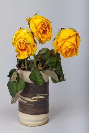 Yellow wilted rose in a vase 스톡 콘텐츠