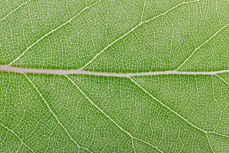Leaf. photo