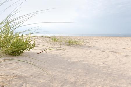 L'herbe sur la plage. Banque d'images