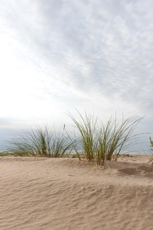 Grass on the beach. photo