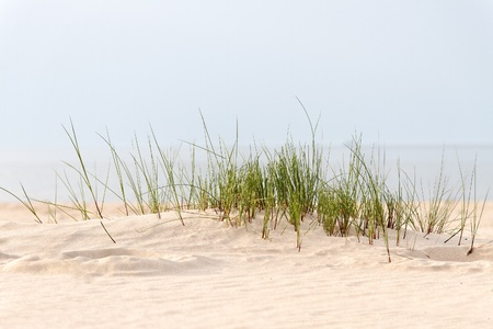 tranquil: Grass and sand.