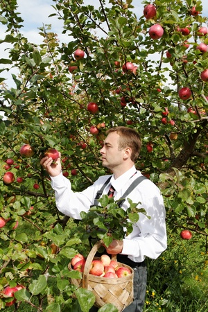 Man and apple tree. photo