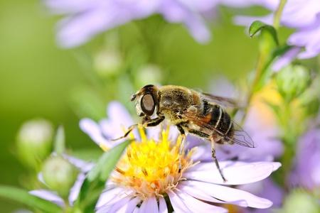 Bee on flower. photo