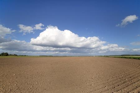 plowed: Plowed field.