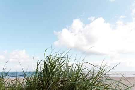 horizont: Green grass on the sea coast.