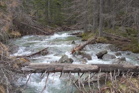 River in High Tatras highland, Slovakia  Stock Photo - 13590141