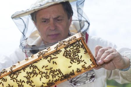 Beekeper et ses abeilles Banque d'images