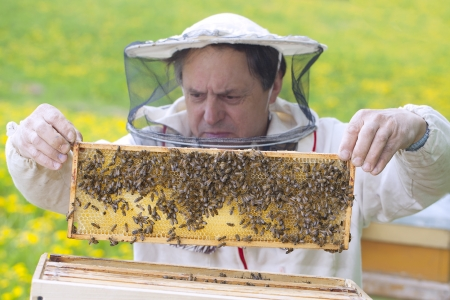 apiarist: Beekeper and his bees