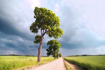 Rural road under dark sky  photo