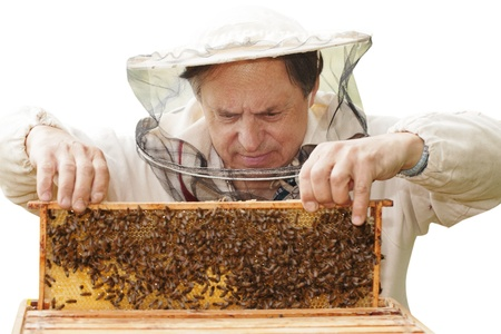 Beekeeper and his bees  photo