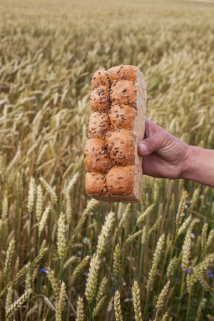 Bread in hand against wheat field  photo