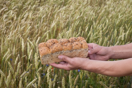 Bread in hands against wheat field  photo