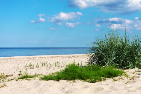 Grass on beach gulf of Riga, Baltic sea  photo
