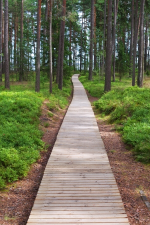 Wooden path in forest  photo