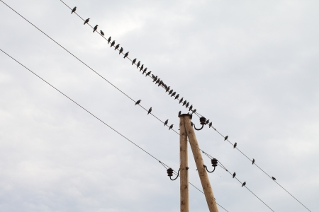 Birds on wires  photo