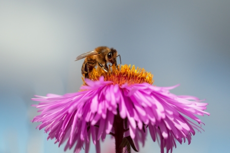 Single bee on flower  photo