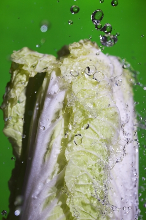 Chineese cabbage under splashing water  photo