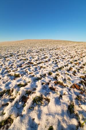 Snow, land and blue sky  photo