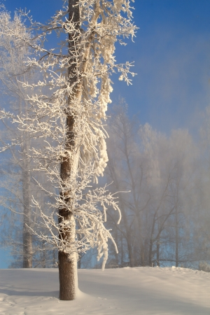 Winter in forest  photo