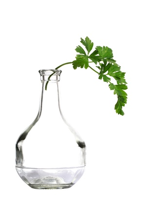 bottleneck: Parsley twig in bottleneck isolated on white  Stock Photo