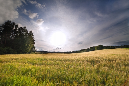 Rural landscape in summertime  photo