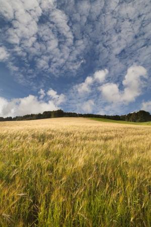 Rural landscape in summertime  photo