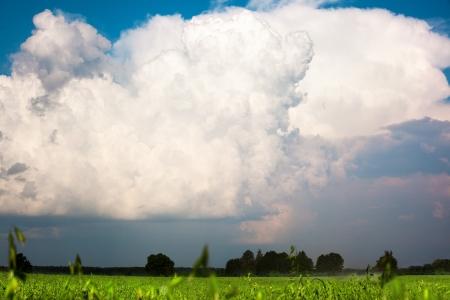 haver veld: Grote wolk boven haver veld