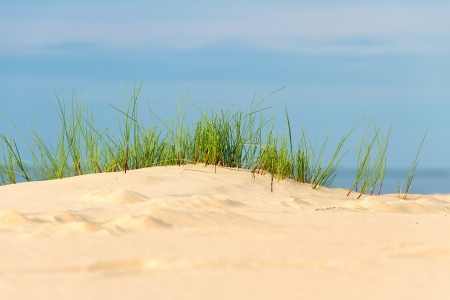 Grass in dunes at Baltic sea, Latvia  photo