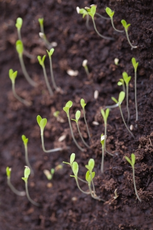 Germination of small plants  photo