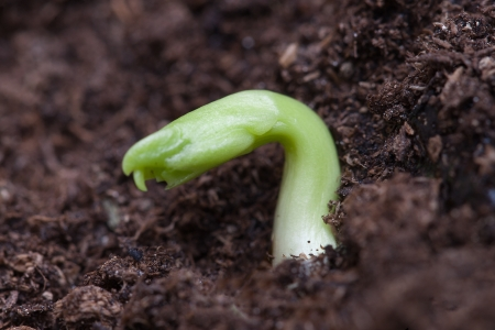 Germination of small plant  photo