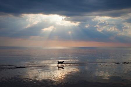 Petit chien d�tente � la mer.