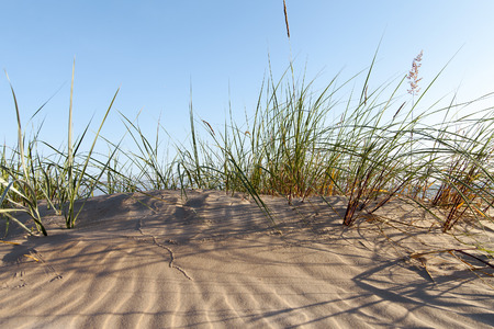jurmala: Green grass in dry baltic beach sand. Stock Photo