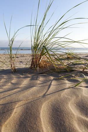 L'herbe verte dans le sable de la plage Baltic Dry.