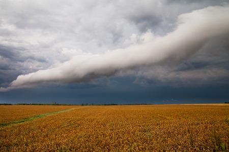 clod: Roll clod over grain field.