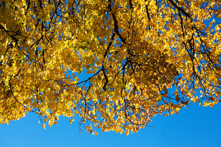 sunligh: Autumn sunligh on yellow leaves. Stock Photo