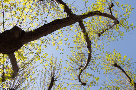 unfold: Spring in new tree leaves.