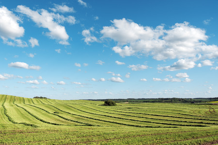 medow: Landscape with mowed field, Latvia.
