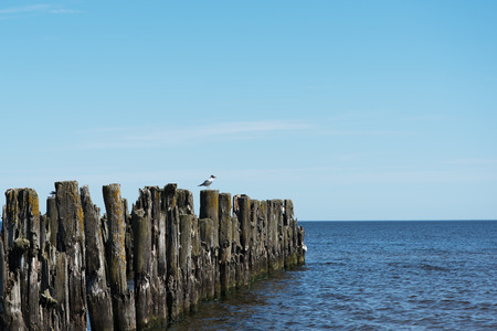 old pier: Remains of old pier, gulf of Riga, Baltic sea.