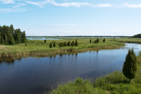 Green reeds on Kanieris lake, Latvia. 版權商用圖片 - 42939086