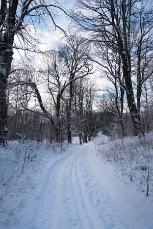 white winter: White land in winter time.
