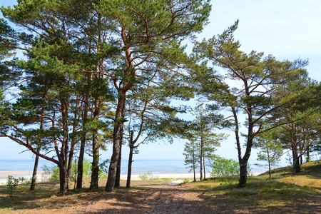 Pines at gulf of Riga, Baltic sea. Stock Photo