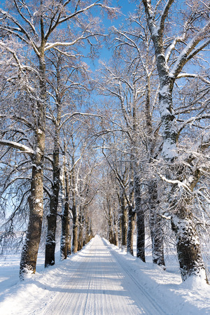 winter time: Country road in winter time. Stock Photo