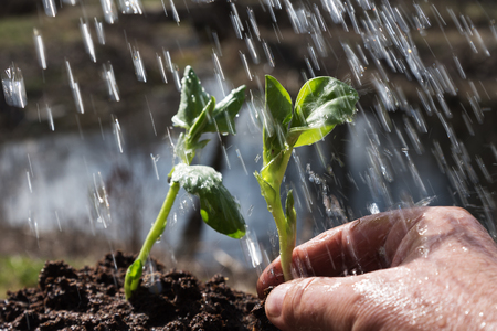 Watering of new plant in springtime.