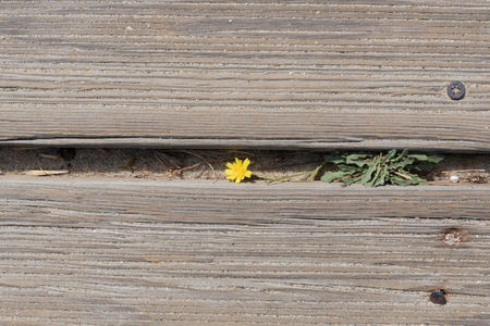 small flower: Small flower between boards. Stock Photo